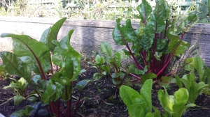 Garden April3