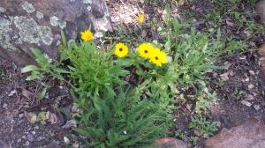 Garden April5