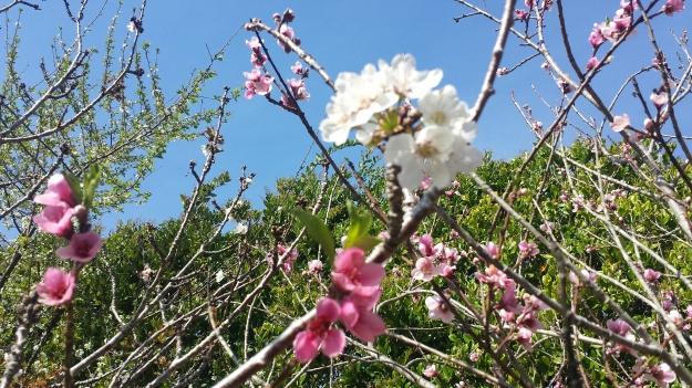 Garden April6