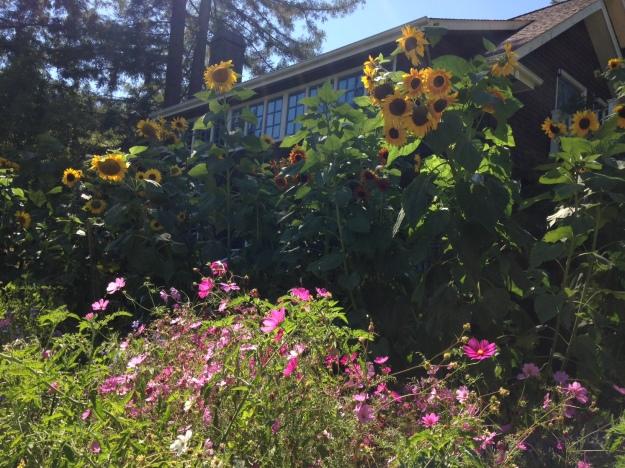 Garden Ideas15