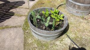 Garden Ideas2