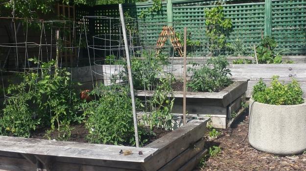 Garden Ideas22
