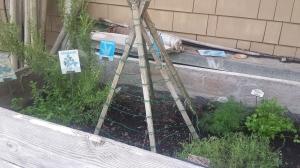 Garden Ideas23