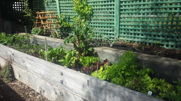 Garden Ideas25