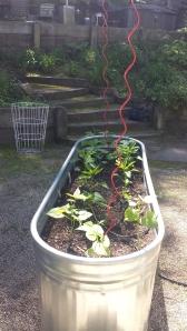 Garden Ideas3