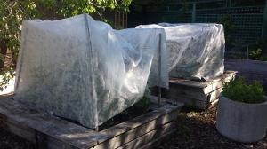 Garden ideas30