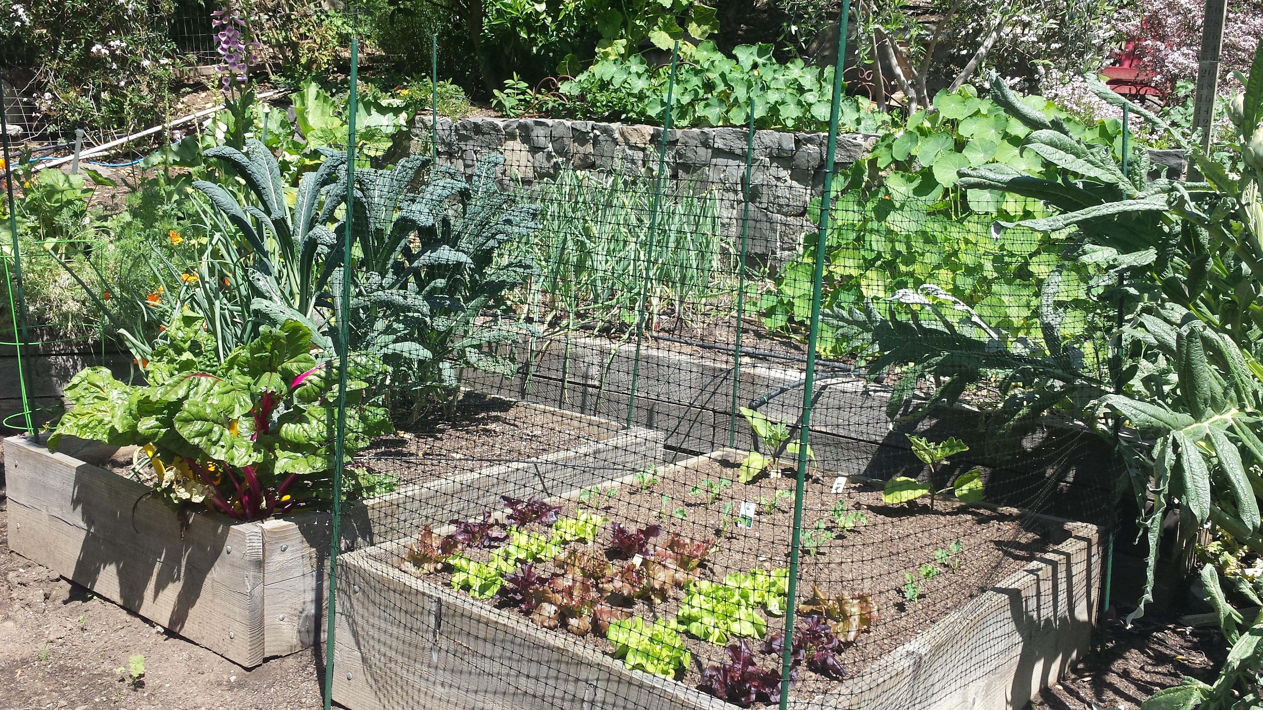 creative vegetable garden ideas goodmotherdiet