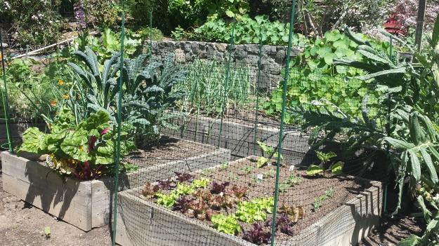 Garden Ideas5