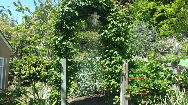 Garden Ideas6