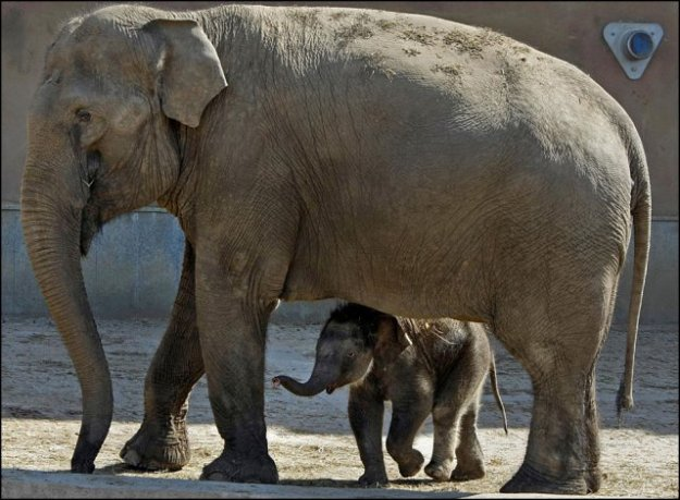090613_animals_large_21