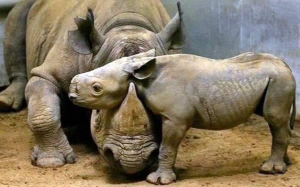baby_animals_25