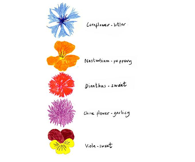 list of edible flowers  flower, Beautiful flower
