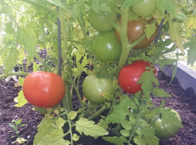Garden June7