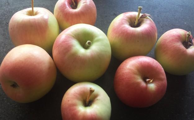 Apple Honey Challah16