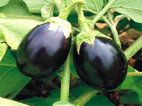 eggplant salad20