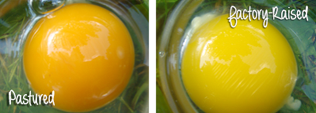 Eggs-light-and-dark